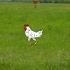 Game Cao thủ bắn gà
