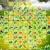 Game Pikachu hoa quả 4